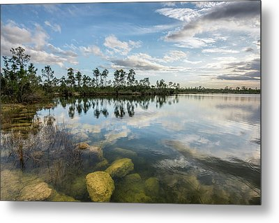 Just Below In The Everglades Metal Print by Jon Glaser