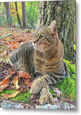 Just Chillin' In The Woods Metal Print