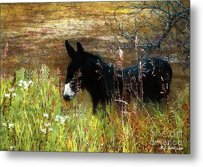 Just Chillin' Metal Print by RC DeWinter