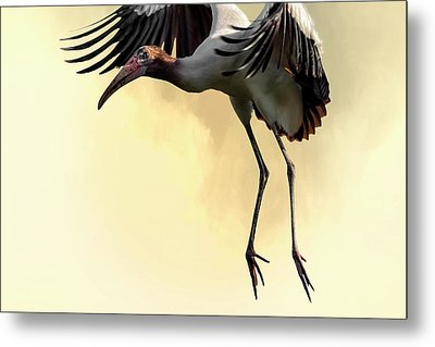 Just Dropping In Metal Print by Cyndy Doty