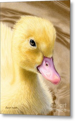 Just Ducky Metal Print by Sarah Batalka