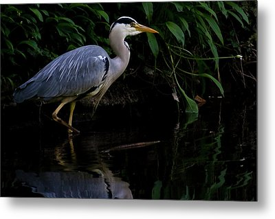 Just Fishing Metal Print by Brian Roscorla
