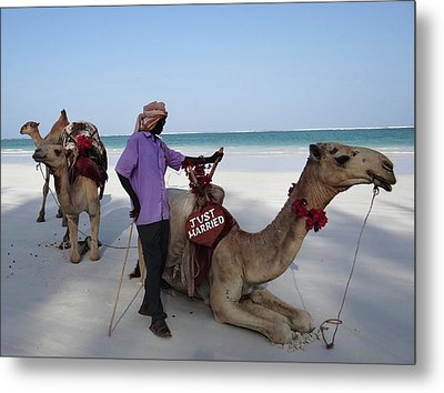 Just Married Camels Kenya Beach 2 Metal Print by Exploramum Exploramum
