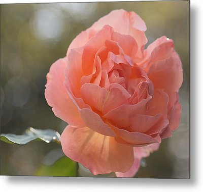 Metal Print featuring the photograph Just Peachy by Julie Andel