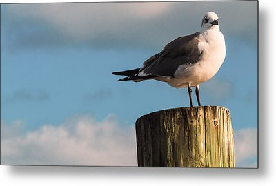 Just Standing On The Dock Metal Print by Phillip Burrow