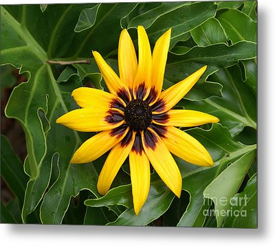 Just Sunning Metal Print by Debbie May