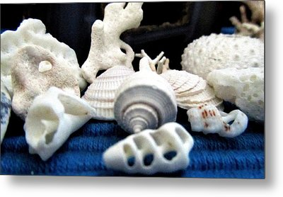 Just White Seashell 1 Metal Print