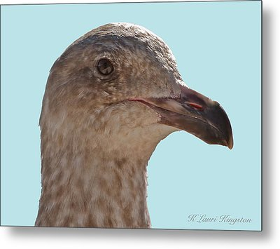 Juvenile Western Gull Bird Metal Print by K L Kingston