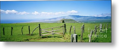 Kamuela Pasture Metal Print by David Cornwell/First Light Pictures, Inc - Printscapes