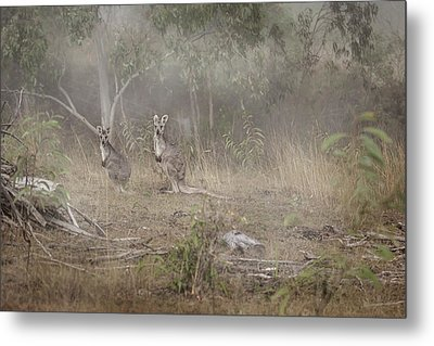 Kangaroos In The Mist Metal Print