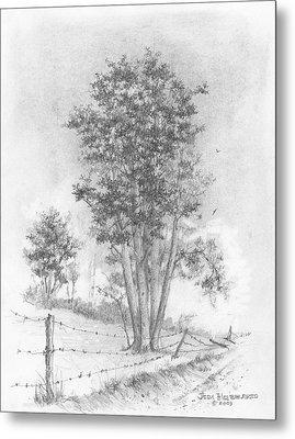 Kansas-cottonwood Metal Print