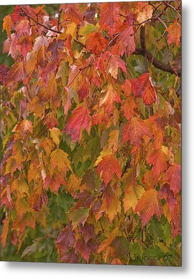 Kates Leaves Metal Print by Michael Flood