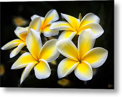 Kauai Plumerias Large Canvas Art, Canvas Print, Large Art, Large Wall Decor, Home Decor, Photograph Metal Print