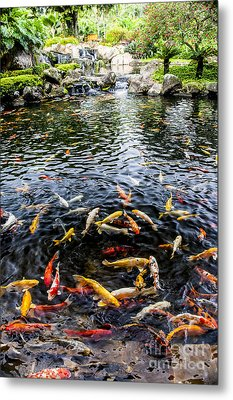 Kauai Koi Pond Metal Print by Darcy Michaelchuk