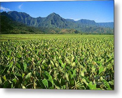 Kauai, Wet Taro Farm Metal Print by Himani - Printscapes