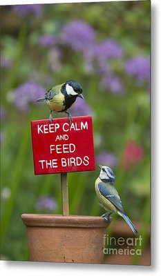 Keep Calm And Feed The Birds Metal Print