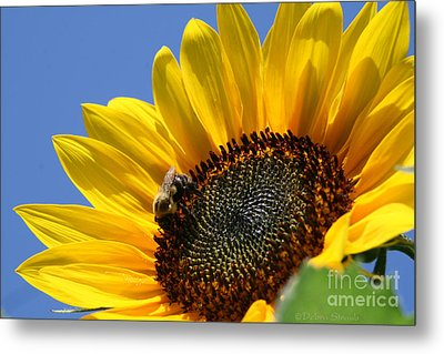 keep facing the Son Metal Print by Debra Straub