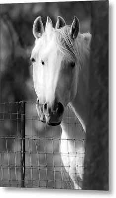 Keeping Their Eyes On Us Metal Print by Wes and Dotty Weber