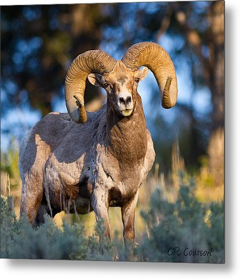 Keeping Watch Metal Print by CR  Courson
