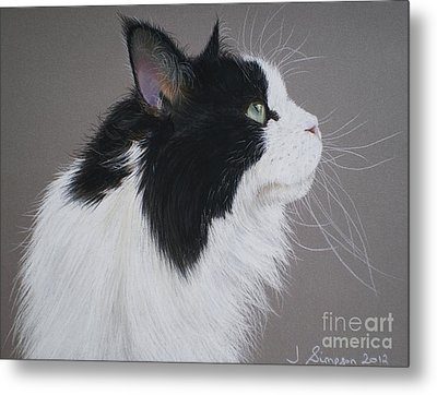 Keeps - Maine Coon Metal Print by Joanne Simpson