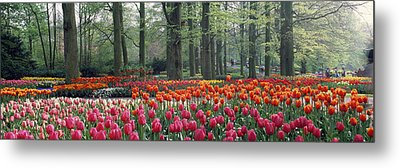 Keukenhof Garden, Lisse, The Netherlands Metal Print by Panoramic Images