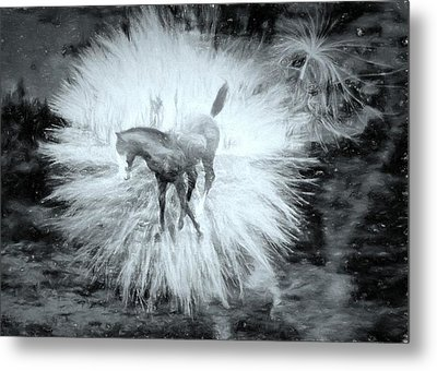 Metal Print featuring the photograph Kicking Up Heels by Kathy Bassett