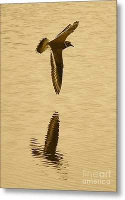Killdeer Over The Pond Metal Print