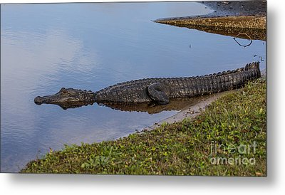 King Of The Lake Metal Print by Zina Stromberg