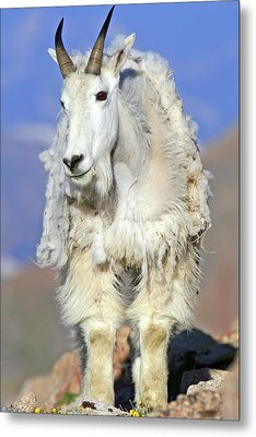 King Of The Mountain Metal Print by Scott Mahon