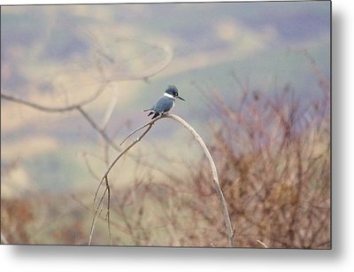 Kingfisher On A Branch Metal Print