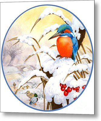 Kingfisher Plate Metal Print by John Francis