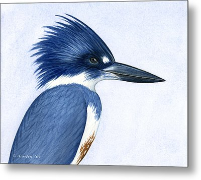 Kingfisher Portrait Metal Print by Charles Harden