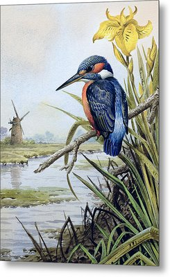 Kingfisher With Flag Iris And Windmill Metal Print by Carl Donner