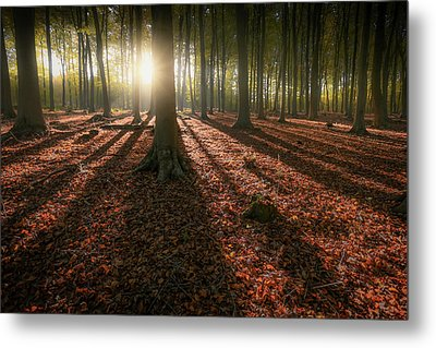 Kingswood Autumn Metal Print