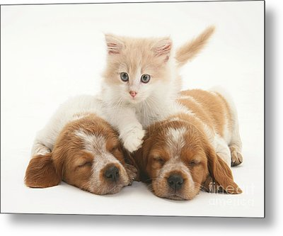 Kitten And Puppies Metal Print by Jane Burton