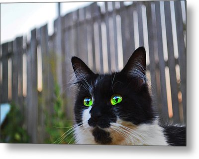 Metal Print featuring the photograph Kitten At Twilight  by Naomi Burgess