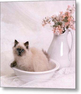 Kitten Bath Metal Print by Crystal Garner