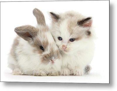 Kitten Cute Metal Print