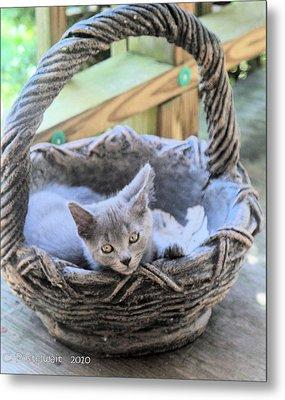 Kitten In A Basket Metal Print