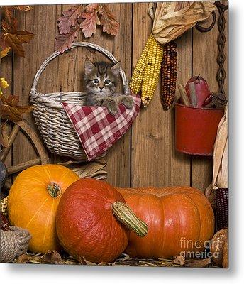 Kitten In A Basket Metal Print by Jean-Louis Klein & Marie-Luce Hubert