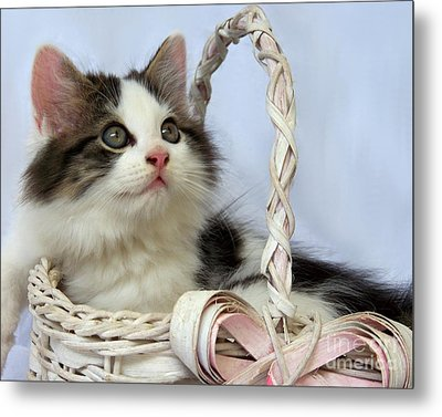 Kitten In Basket Metal Print by Jai Johnson