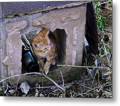 Kitten In The Junk Yard Metal Print