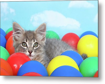 Kitten Laying In Brightly Colored Balls Metal Print by Sheila Fitzgerald