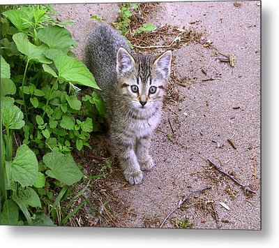 Kitten On The Patio Metal Print