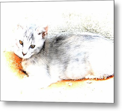 Kitten Tranquility Metal Print by Dorothy Berry-Lound
