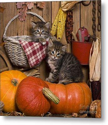 Kittens In Autumn Metal Print by Jean-Louis Klein & Marie-Luce Hubert