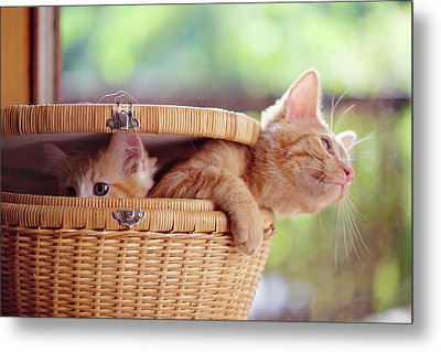 Kittens In Basket Metal Print by Sarahwolfephotography