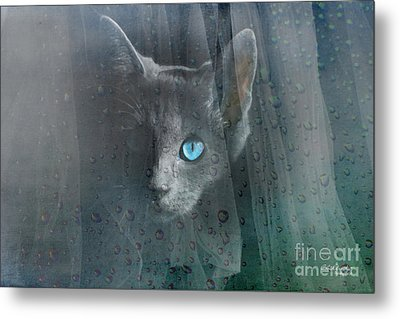 Kitty At The Window Metal Print