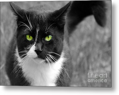 Metal Print featuring the photograph Kitty Fallowing by Lila Fisher-Wenzel