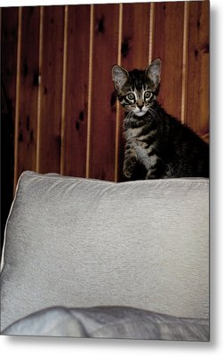 Metal Print featuring the photograph Kitty by Laura Melis